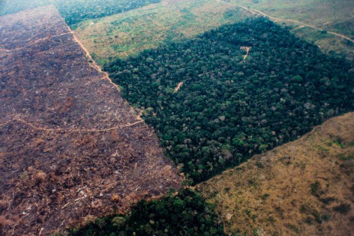 O desmatamento na Floresta Amazônica de agosto de 2018 a julho de 2019 foi o maior da década. Foto: Ricardo Funari/Brazil Photos/LightRocket via Getty Images