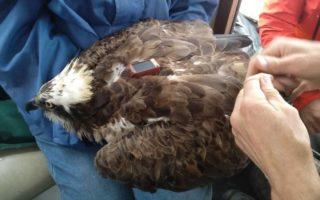 As aves tinham rastreadores que avisavam para os pesquisadores onde elas estavam. Foto: Facebook/ Reprodução.