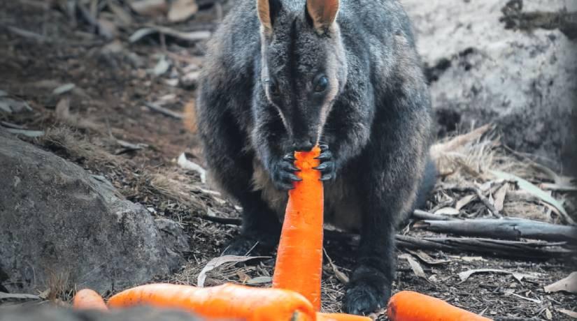 Australia-animais-home