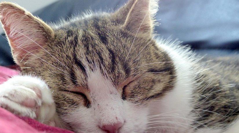 Gato-dormindo-home