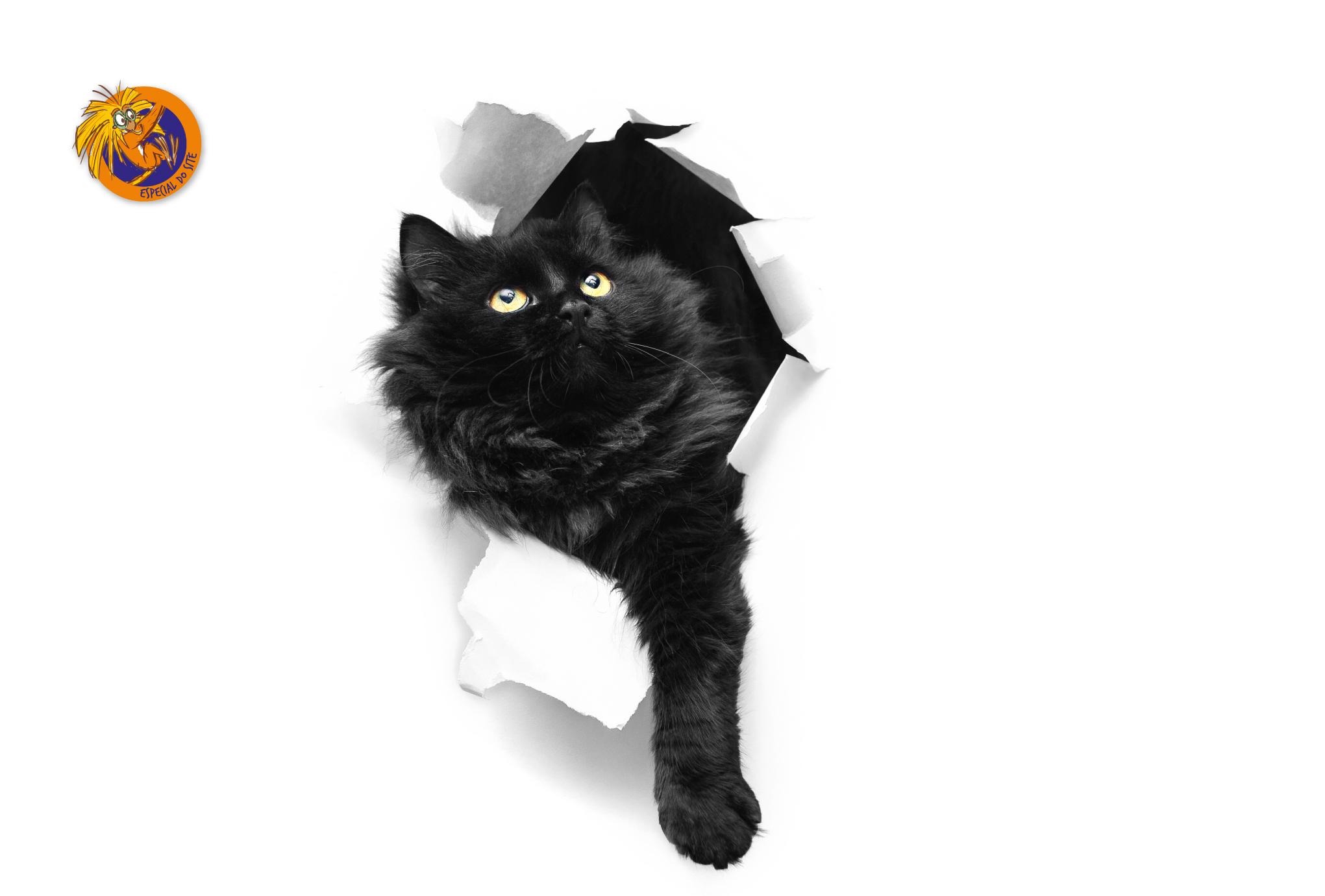 dia-do-gato-interna
