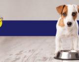 alimentos-cachorro-duvida-animal-home