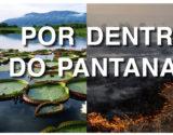 home_colecao_pantanal