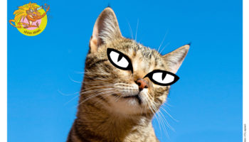 interna_pupila dos gatos
